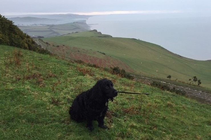 12 Walks of Christmas - Day 11 - Eype Down