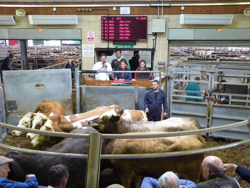 Livestock Results from Frome Market