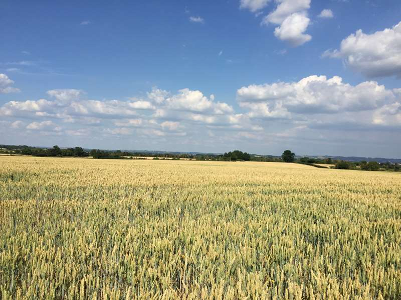 Contract Farming Opportunity - The Kingsdon Estate