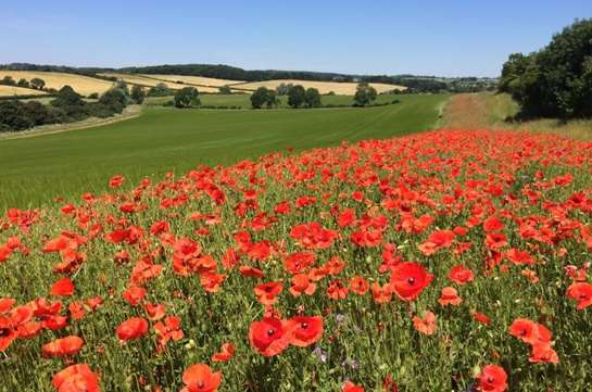 Countryside Stewardship Scheme 2019 Now Open