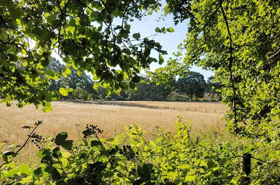 BPS, Countryside & Environmental Stewardship applications deadline extended